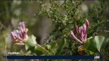 La mort d'Anne Frank sera honorée en Corse autour de l'arbre planté en son nom
