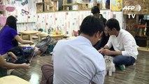 Birmaner kommen auf Hund und Katze