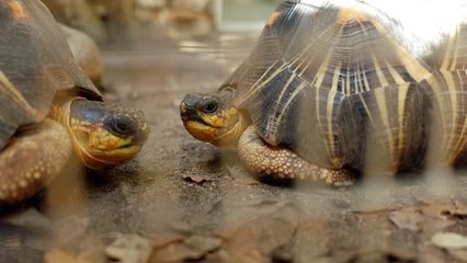 VIDÉO. A Cupulatta, la plus grande cité de tortues en Europe