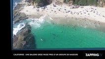 Californie : Une baleine grise filmée près d'un groupe de nageurs (Vidéo)