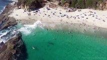 Enorme ballena nada entre bañistas sin que éstos se percaten