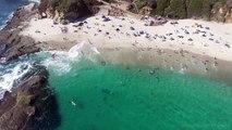 Une énorme baleine grise très près de la plage de Newport, Californie