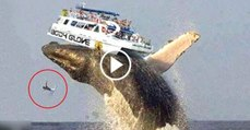 سمندر کی رانی وہیل مچھلی نے کیسے بحری جہاز کے پرخچے اڑادیے .لوگوں کے ساتھ جو ہوا دیکھ کر اپ لوگوں کی روح کانپ جائے گی دل دہلا دینے والی ویڈیو دیکھیں