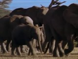 ANIMAL PLANET - THE MOST EXTREME:  MOMS - Discovery Animals Nature (full documentary episode)