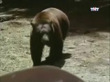ANIMAL PLANET - THE MOST EXTREME:  TROUBLEMAKERS - Discovery Animals Nature (full documentary episode)