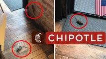 Hujan tikus; tikus terjatuh dari langit-langit Dallas Chipotle - TomoNews