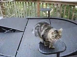 Ninguém queria este gato de 6 dedos - Quando ele foi adotado, ficam boquiabertos com o que ele CONSEGUE fazer!