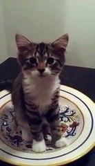 Ela pergunta ao gato o que ele está fazendo. Confira a resposta dele ao olhar para cima...