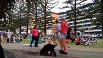 Un chien refuse de laisser son propriétaire quitter le parc !