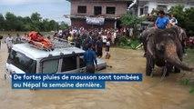 Népal : des touristes évacués des inondations à dos d'éléphant