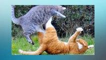 Soñar Con Gatos Peleando   ¿Qué Significa Soñar Con Gatos Peleando