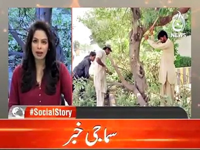 After International applause, Pakistani media praises the Billion Tree Tsunami Project of KPK