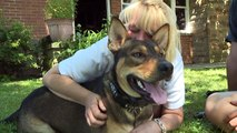 Dog Drags Owner Out of Burning Home, Named Heroic Dog of the Year