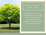 Best Tree Removal & Tree Trimming Services in Fontana