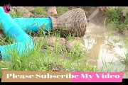 Amazing Fishing Trap   How to Make a Simple Fish Trap To Catch Fish