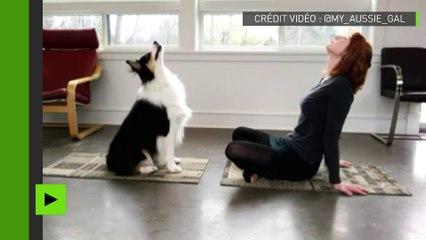 Des exercices de yoga pour vous et…votre chien !