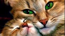 Ces chats ont sauvés ces Humains !