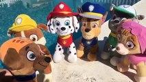 New episodes _ Patrulla Canina espanol y LA FIESTA ACUÁTICA EN LA PISCINA CON COCODRILO Y TIBURÓN ,cartoons animated  Movies  tv series show 2018