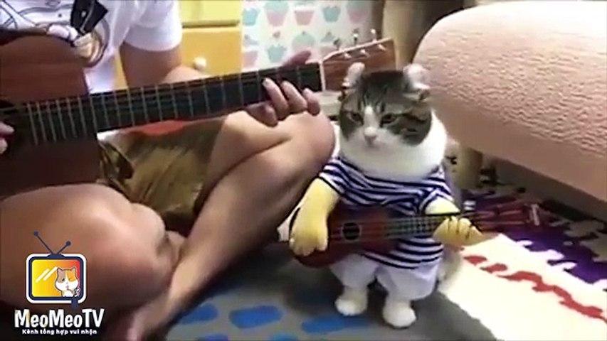 Clip Hài   Những chú mèo hài hước nhất quả đất   Godialy.com