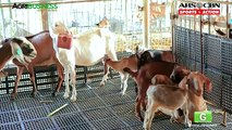 Laitier chèvre Agriculture partie laitier chèvre Agriculture dans le secteur agroalimentaire