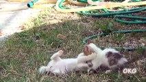 Bébé portant chat chatons maman vidéos Compilation 2017