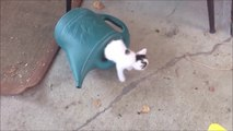 Mais combien y a-t-il de chatons dans cet arrosoir...  Fou