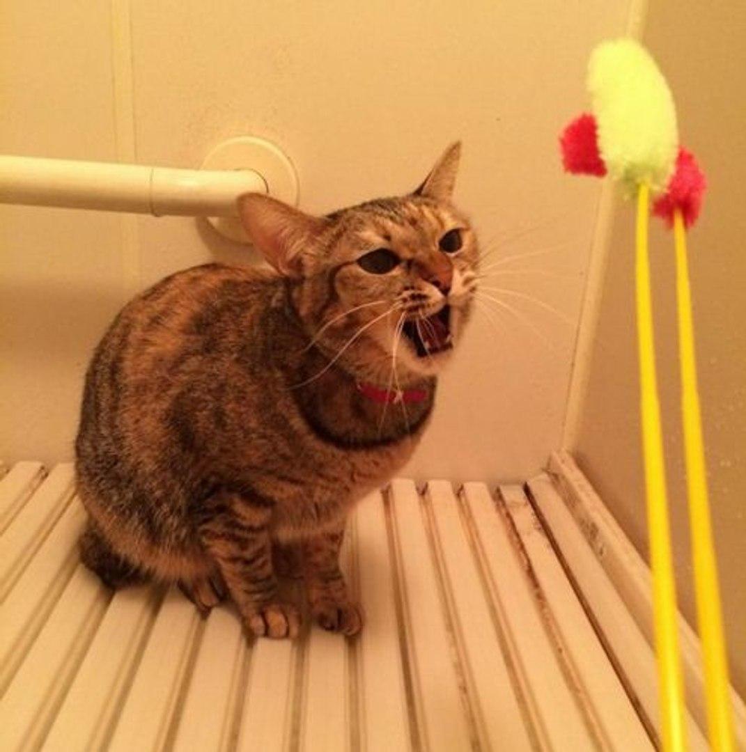 Top Cute Cats Funny Videos