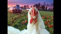 Chanson des sons le le le le la les enfants animaux aiment écouter les sons des animaux de la ferme et les animaux
