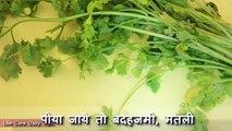 Et beauté beauté avantages coriandre santé dans de de Avantages choquant coriandre vert |
