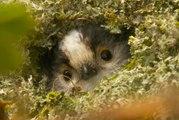 Long-tailed tit - Loài chim nhỏ bé đáng yêu và  siêu dễ thương