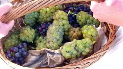Zagorje Wine Region