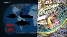 Le Dessous des cartes - Des océans sans poissons ARTE Reportage
