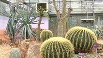 Visites de serres au Conservatoire Botanique de Brest