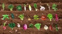 Enfants pour enfants amour garderie rimes chanson légume les légume Nous vous vous vous |