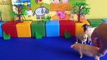 Et de Pour étudier Surprise enfants zoo animaux doeuf enfants âge pré-scolaire images