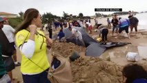 Crowds pull together to save beached whale on Brazil beach