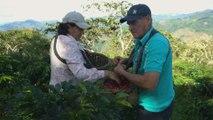 Perú celebra décimo día del café para incentivar el consumo a nivel nacional