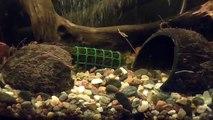 Dans le de comme Faire cuire la noix de coco de noix de coco Aquarium Grotto Aquarium