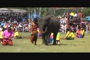 Surin - Thai Dancing with Elephants - Elephant Roundup, Thailand