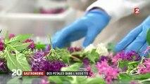 Gastronomie : les fleurs comestibles ont envahi les cuisines des grands chefs
