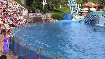 Dolphin Days (Full Show) at SeaWorld San Diego on 8-30-15