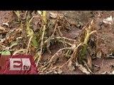 Cambio climático la mayor amenaza para los cultivos en Tlaxcala / Mariana H