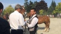 Concours départemental d'élevage du cheval breton
