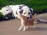 Doux dalmatien être amis sauvage priant mante