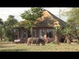 Tshukudu Game Lodge, Hoedspruit - South Africa Travel Channel 24