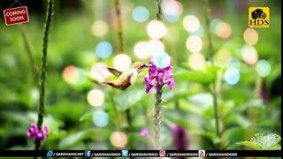 New Naat Sharif - Qari Shahid Mahmood Qadri New Naat Sharif 2017 Very Beautiful Naat Sharif