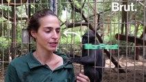 Tel Aviv : un macaque adopte un poulet (au lieu de le manger)