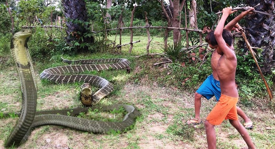 World's Biggest Snake Anaconda Found in India   Catch By Two Brave Boy