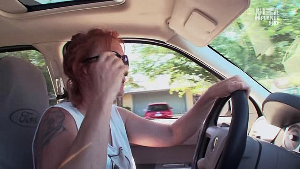 Pit Bulls And Parolees S02e08 Video Dailymotion