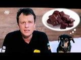 Pet na Pan #01 - Cinco acidentes que você pode evitar que aconteça com seu pet | Jovem Pan